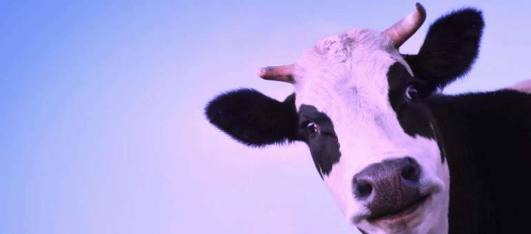 Почему любой маркетолог должен знать о фиолетовой корове?