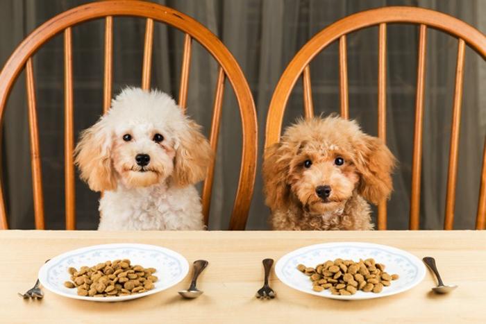 Миллионы людей слушают музыку, хотят познакомиться, ездят на такси, но очень мало людей хотят счетчик калорий для своей собаки.